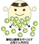 酵母は酵素を作り出すお母さん的存在